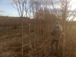 Arboles a plantar